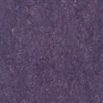 linoleum violet